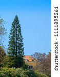 High Green Exotic Conifer Tree...