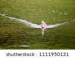 wild duck on the water | Shutterstock . vector #1111950131
