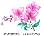 watercolor picture of pink... | Shutterstock . vector #1111969931