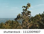landscape of the trees in the... | Shutterstock . vector #1112009807