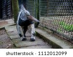 an anteater in the enclosure | Shutterstock . vector #1112012099