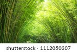 Bamboo And Green Background...