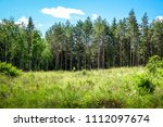 a meadow with tall grass and... | Shutterstock . vector #1112097674