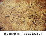 the texture of the geyserite... | Shutterstock . vector #1112132504