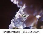 beautiful wedding flower... | Shutterstock . vector #1112153024