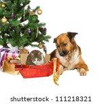 A Faithful Dog Looks...