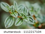 green leaf plant | Shutterstock . vector #1112217104