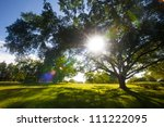 green trees in park and... | Shutterstock . vector #111222095
