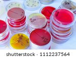 petri dish. microbiological... | Shutterstock . vector #1112237564