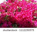 albufeira   algarve   portugal | Shutterstock . vector #1112250575
