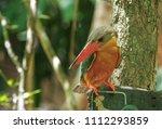 stork billed kingfisher ... | Shutterstock . vector #1112293859