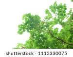 green leaves isolated on white | Shutterstock . vector #1112330075