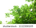 green leaves isolated on white | Shutterstock . vector #1112330105