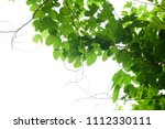 green leaves isolated on white | Shutterstock . vector #1112330111