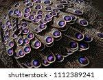 grey peacock pheasant ...   Shutterstock . vector #1112389241