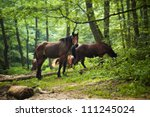 horses group in green forest | Shutterstock . vector #111245024