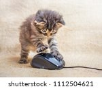 Stock photo a little kitten is played with a computer mouse cat caught a mouse fun kids fun 1112504621