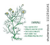 chamomile herb with a list of... | Shutterstock .eps vector #1112516141