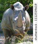 the white rhinoceros or square...   Shutterstock . vector #1112539619