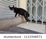Stock photo low angle view of a black homeless street cat looking at the camera preparing to escape or run in 1112548571