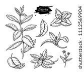 stevia  vector drawing. herbal... | Shutterstock .eps vector #1112569904