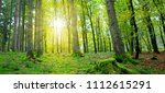 summer forest with sun light. | Shutterstock . vector #1112615291