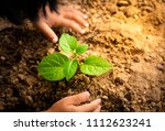 kid planting a plant | Shutterstock . vector #1112623241