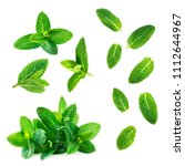 Fresh Mint Leaves Collection ...