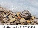 shell of a snail on the coast... | Shutterstock . vector #1112650304