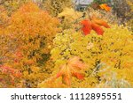 red yellow maple falling leaves ... | Shutterstock . vector #1112895551