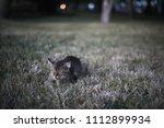cat in gelendzhik  russia. june ... | Shutterstock . vector #1112899934