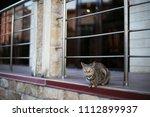 cat in gelendzhik  russia. june ... | Shutterstock . vector #1112899937
