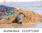 plastic marine pollution. seal... | Shutterstock . vector #1112971265