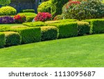 flowers  nicely trimmed bushes... | Shutterstock . vector #1113095687