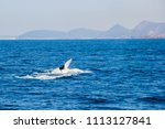 whale watching in front of port ... | Shutterstock . vector #1113127841