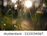 aberration of optic | Shutterstock . vector #1113154367