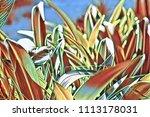 digital illustration   lily... | Shutterstock . vector #1113178031