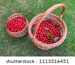 two creels with cherries on... | Shutterstock . vector #1113316451