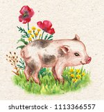 hand drawn cute miniature pig... | Shutterstock . vector #1113366557