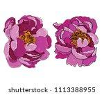 peony peonies vector color    Shutterstock .eps vector #1113388955