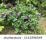 purple blooming flowers | Shutterstock . vector #1113398549