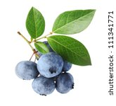 close up of a blueberry branch... | Shutterstock . vector #111341771