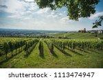 vine yard landscape in south... | Shutterstock . vector #1113474947
