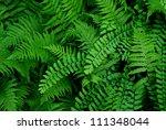 Variety Of Green Ferns