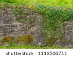 ivy covered wall  in summertime ... | Shutterstock . vector #1113500711