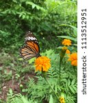 a butterfly and yellow blooming ... | Shutterstock . vector #1113512951