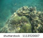 Small photo of Nemo and coral at Koh Hong ,Krabi
