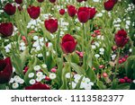 background photo of red flowers | Shutterstock . vector #1113582377