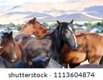 wild horses mustangs of nevada  ... | Shutterstock . vector #1113604874