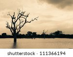Silhouette Of Bare Trees With...